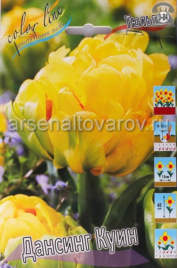 Посадочный материал цветов тюльпан Дансинг Куин многолетник махровая луковица 10 шт. Нидерланды (Голландия)
