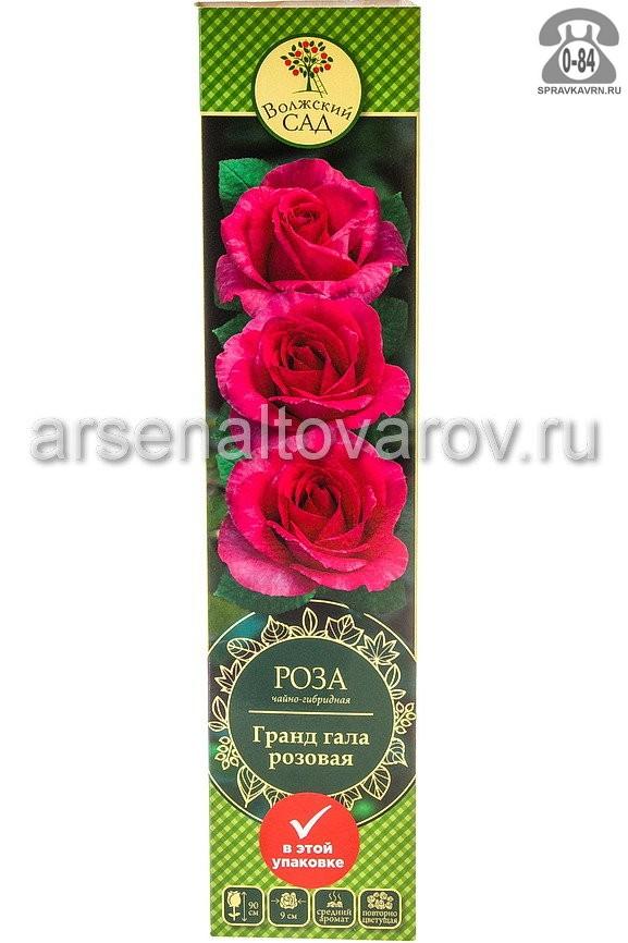 Саженцы декоративных кустарников и деревьев роза чайно-гибридная Гранд Гала кустистый лиственные зелёнолистный бокаловидный красный открытая Россия
