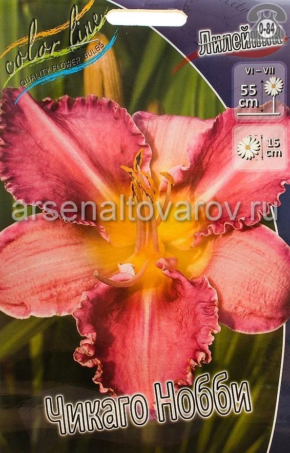 Посадочный материал цветов лилейник Чикаго Нобби многолетник корневище 1 шт. Нидерланды (Голландия)