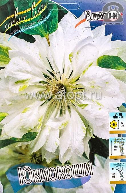 Посадочный материал цветов клематис Юкиокоши многолетник махровая корневище 2 шт. Нидерланды (Голландия)