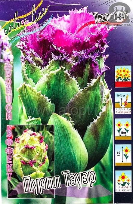 Клубнелуковичный цветок тюльпан Двойной Эффект Пурпл Тауэр
