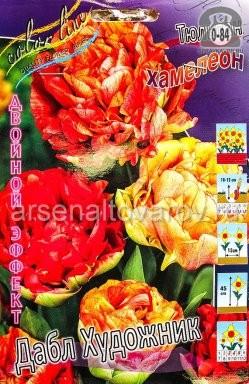 Клубнелуковичный цветок тюльпан Двойной Эффект Дабл Художник