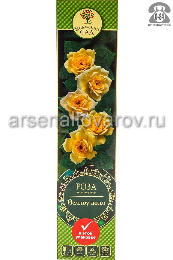 Саженцы декоративных кустарников и деревьев роза миниатюрная Йеллоу Долл кустистый лиственные зелёнолистный махровый лимонно-желтый открытая Россия