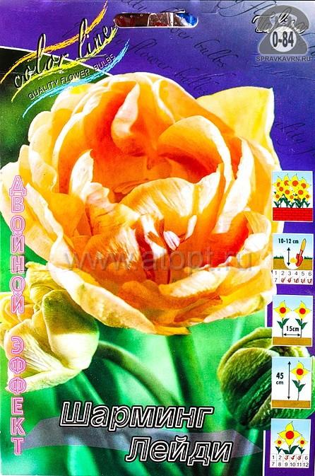 Клубнелуковичный цветок тюльпан Двойной Эффект Шарминг Лейди
