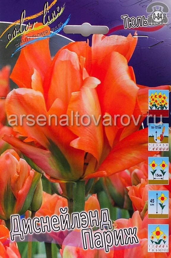 Посадочный материал цветов тюльпан Диснейлэнд Париж многолетник махровая луковица 10 шт. Нидерланды (Голландия)