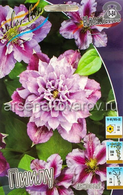Посадочный материал цветов клематис Пиилу многолетник махровая корневище 2 шт. Нидерланды (Голландия)