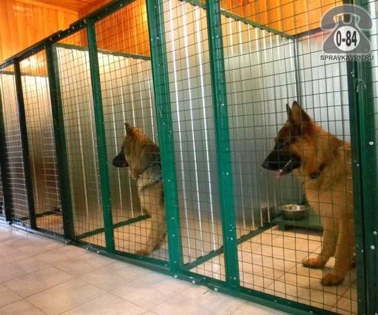 Цель создания гостиницы для животных
