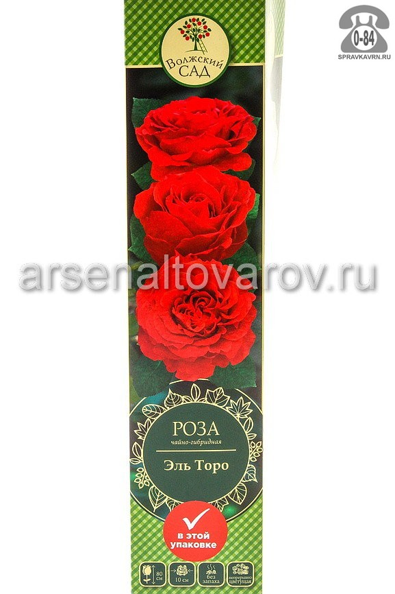 саженцы роза чайно-гибридная Эль Торо ярко-красная (Россия)