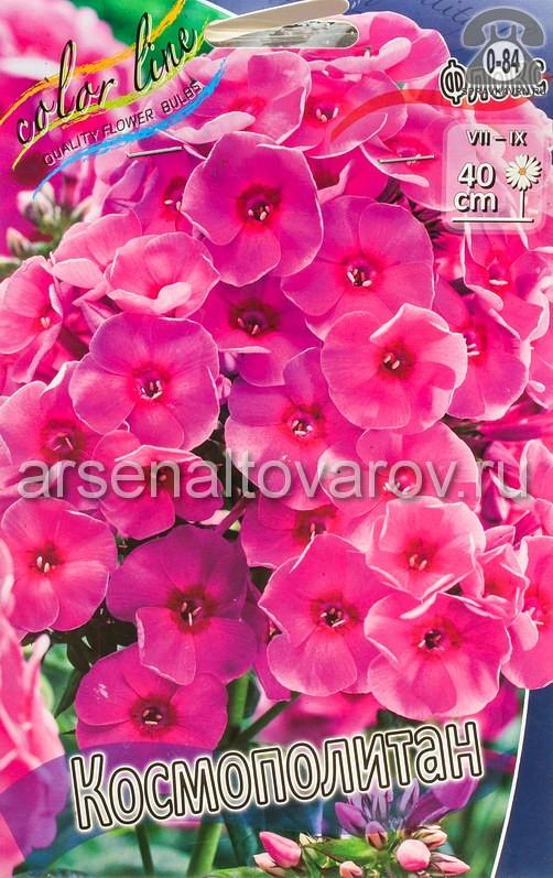 Посадочный материал цветов флокс Космополитан многолетник корневище 2 шт. Нидерланды (Голландия)