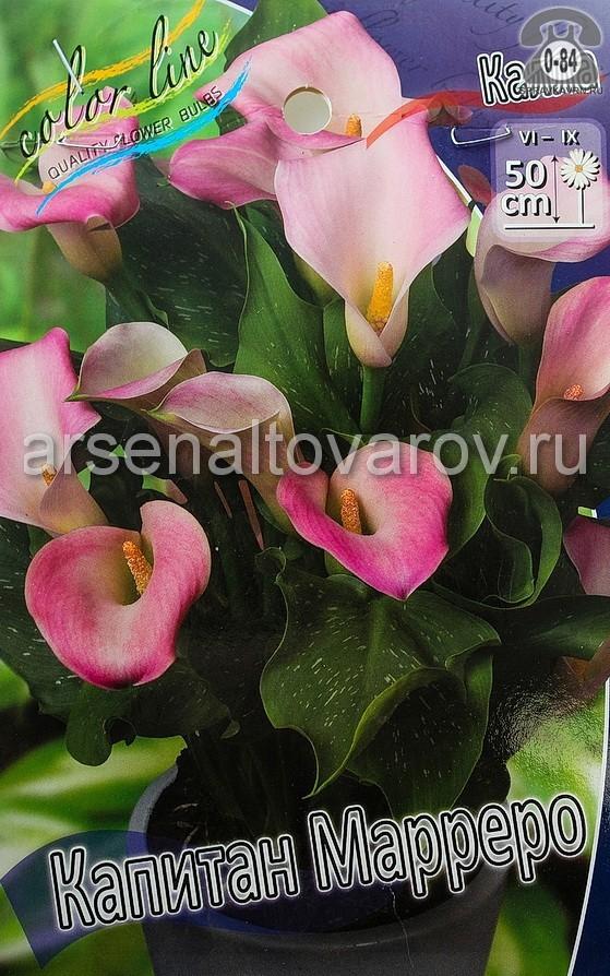 Посадочный материал цветов калла (белокрыльник) Капитан Марреро многолетник клубень 2 шт. Нидерланды (Голландия)