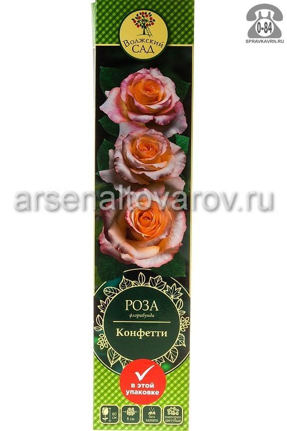 саженцы роза флорибунда Конфетти светло-кремовый с желтым (Россия)