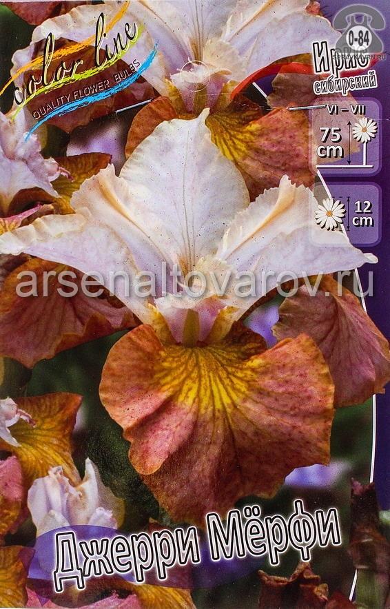 Посадочный материал цветов ирис (касатик) сибирский Джерри Мерфи многолетник корневище 2 шт. Нидерланды (Голландия)
