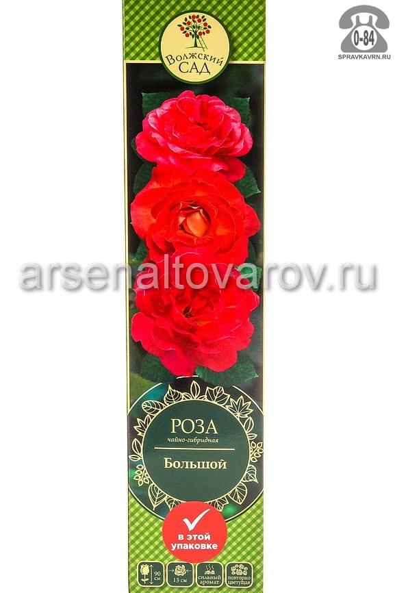 Саженцы декоративных кустарников и деревьев роза чайно-гибридная Большой кустистый лиственные зелёнолистный бокаловидный алый с жёлтым открытая Россия