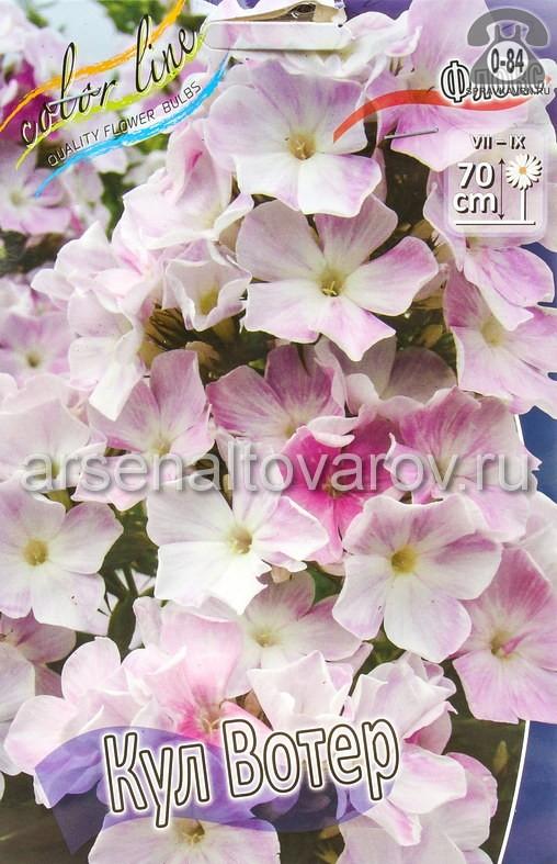 Посадочный материал цветов флокс Кул Вотер многолетник корневище 2 шт. Нидерланды (Голландия)