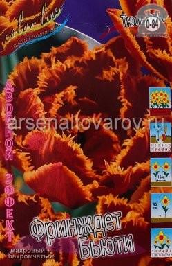 Клубнелуковичный цветок тюльпан Двойной Эффект Фринджет Бьюти