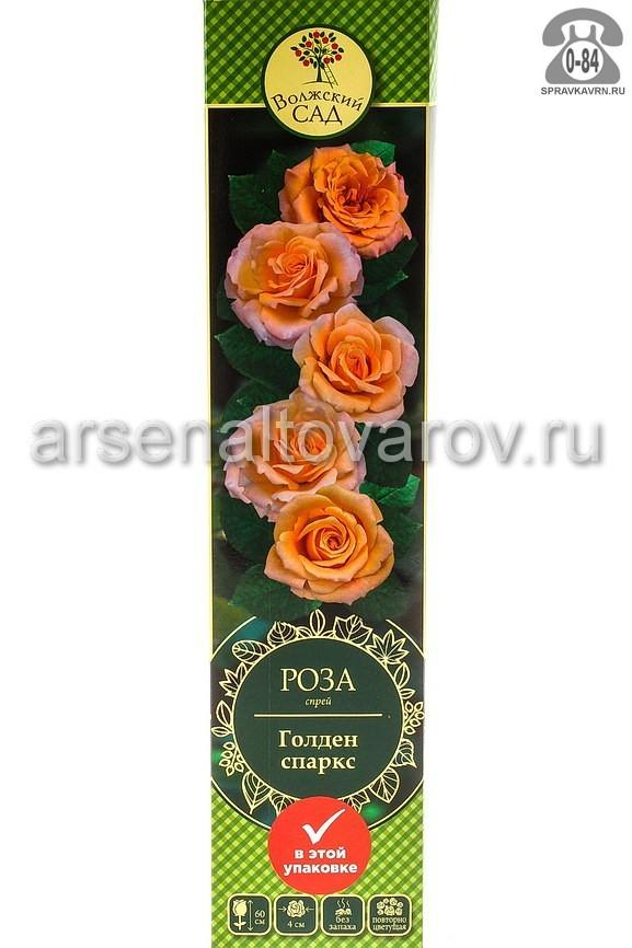 саженцы роза спрей Голден Спаркс золотисто-желтая (Россия)