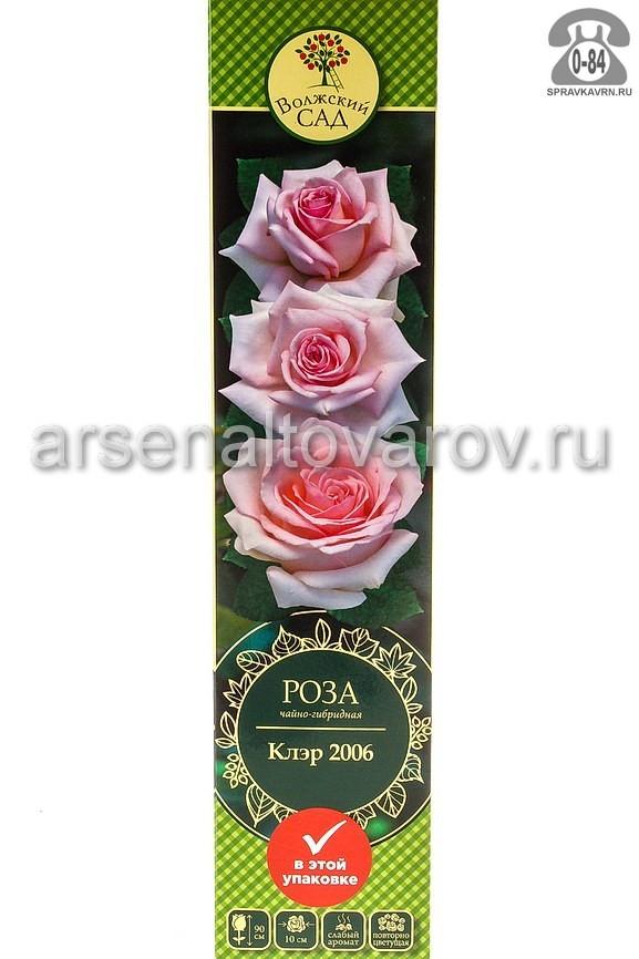 саженцы роза чайно-гибридная Клэр 2006 светло-розовая (Россия)