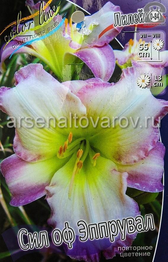Посадочный материал цветов лилейник Сил оф Эппрувал многолетник корневище 1 шт. Нидерланды (Голландия)
