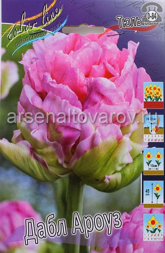 Посадочный материал цветов тюльпан Дабл Ароуз многолетник махровая луковица 10 шт. Нидерланды (Голландия)