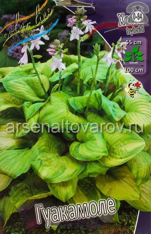 Посадочный материал цветов хоста Гуакамоле многолетник корневище 2 шт. Нидерланды (Голландия)