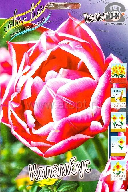 Посадочный материал цветов тюльпан Коламбус многолетник махровая луковица 10 шт. Нидерланды (Голландия)