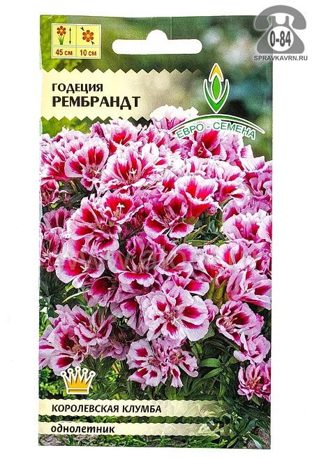 Семена цветов Евро-семена годеция Рембрандт однолетник 0,2 г Россия