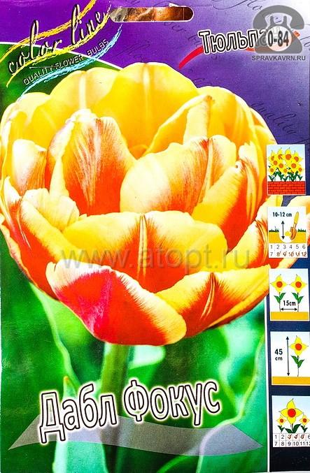 Посадочный материал цветов тюльпан Дабл Фокус многолетник махровая луковица 10 шт. Нидерланды (Голландия)
