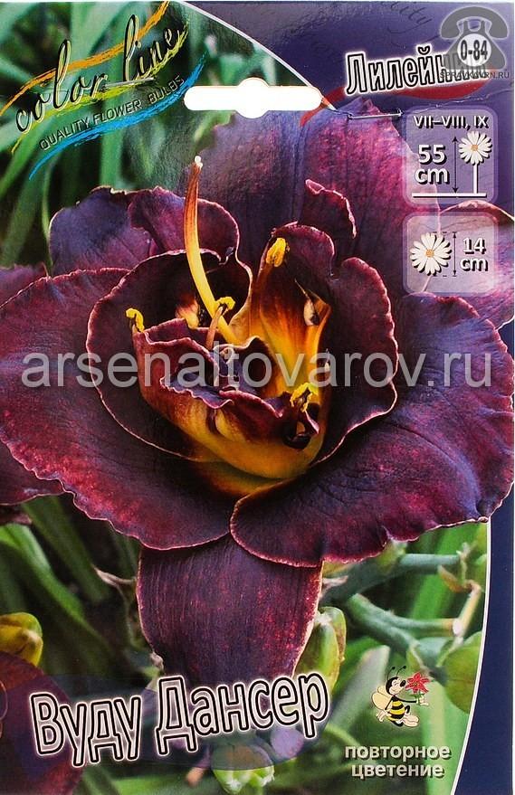 Посадочный материал цветов лилейник Вуду Дансер многолетник махровая корневище 1 шт. Нидерланды (Голландия)