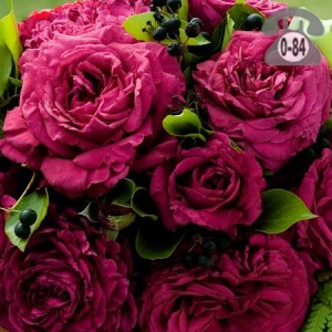 Воронежский питомник роз