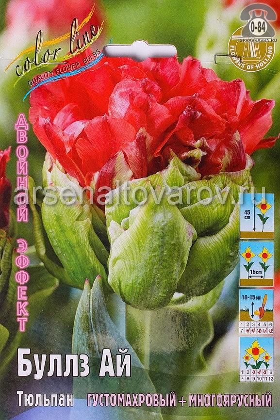 Клубнелуковичный цветок тюльпан Двойной Эффект Буллз Ай