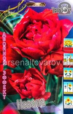 Клубнелуковичный цветок тюльпан Двойной Эффект Навона