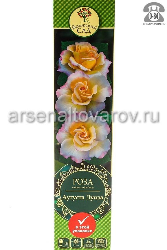 саженцы роза чайно-гибридная Аугуста Луиза персиковая с розовым (Россия)