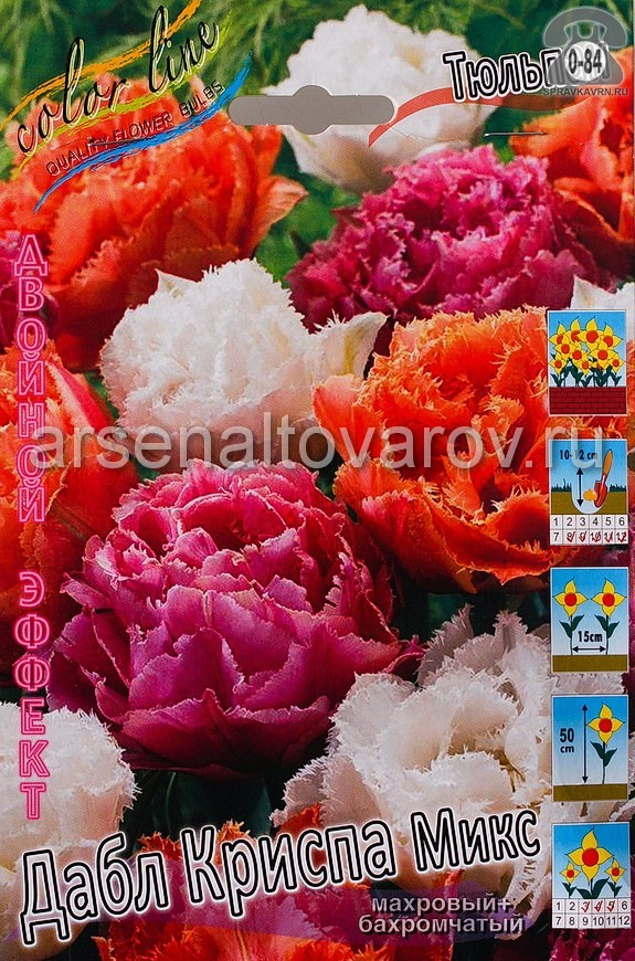 Клубнелуковичный цветок тюльпан Двойной Эффект Дабл Криспа Микс