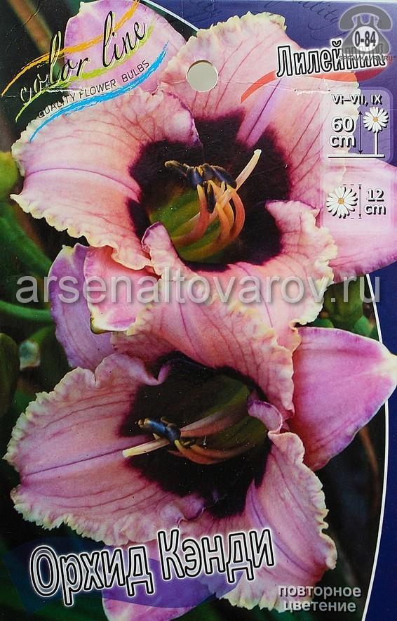 Посадочный материал цветов лилейник Орхид Кэнди многолетник гофрированная корневище 1 шт. Нидерланды (Голландия)