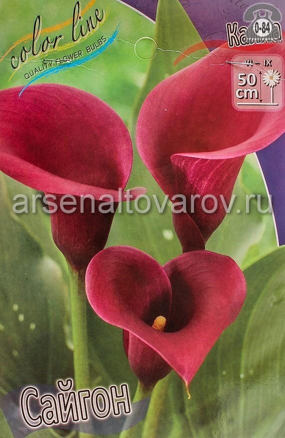 Посадочный материал цветов калла (белокрыльник) Сайгон многолетник клубень 2 шт. Нидерланды (Голландия)