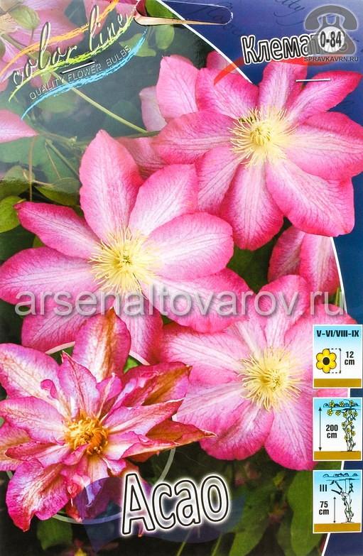 Посадочный материал цветов клематис Асао многолетник корневище 2 шт. Нидерланды (Голландия)