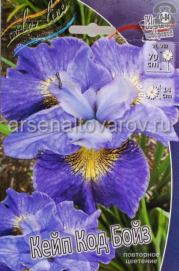 Посадочный материал цветов ирис (касатик) сибирский Кейп Код Бойз многолетник сине-фиолетовый корневище 2 шт. Нидерланды (Голландия)