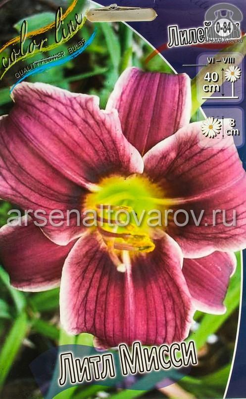 Посадочный материал цветов лилейник Литл Мисси многолетник корневище 2 шт. Нидерланды (Голландия)