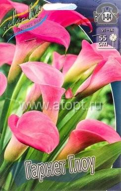 Посадочный материал цветов калла (белокрыльник) Гарнет Глоу многолетник клубень 2 шт. Нидерланды (Голландия)