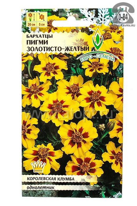 семена Бархатцы однолетник Пигми золотисто-желтый отклоненные 0,1 г цветной пакет (Евро-семена) годен до: 31.12.22