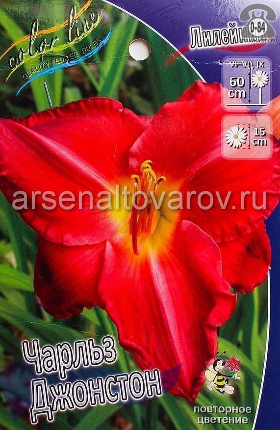 Посадочный материал цветов лилейник Чарльз Джонстон многолетник корневище 2 шт. Нидерланды (Голландия)
