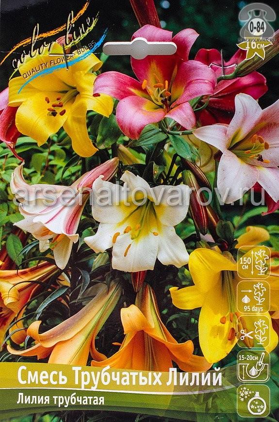 Клубнелуковичный цветок лилия трубчатая Смесь