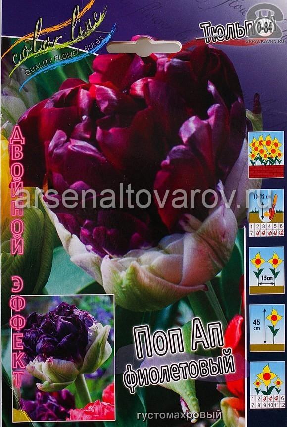 Клубнелуковичный цветок тюльпан Двойной Эффект Поп Ап Фиолетовый