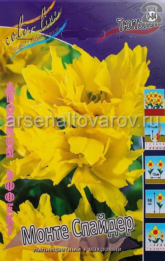 луковичные тюльпан двойной эффект Монте Спайдер (в пакете 10 шт) цена за пакет (Голландия)