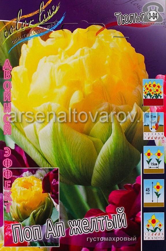 Клубнелуковичный цветок тюльпан Двойной Эффект Поп Ап Желтый