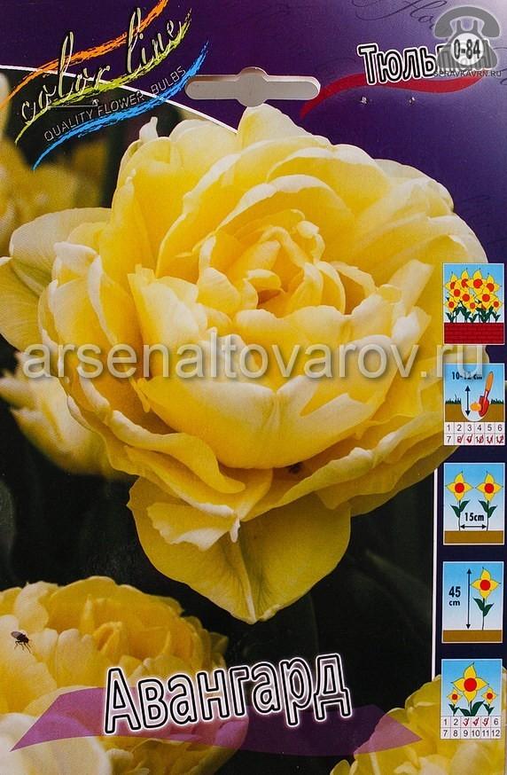 Посадочный материал цветов тюльпан Авангард многолетник махровая луковица 10 шт. Нидерланды (Голландия)