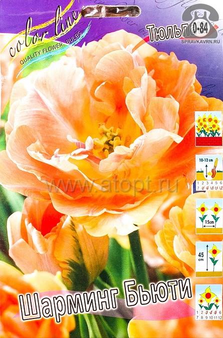 Клубнелуковичный цветок тюльпан Двойной Эффект Шарминг Бьюти