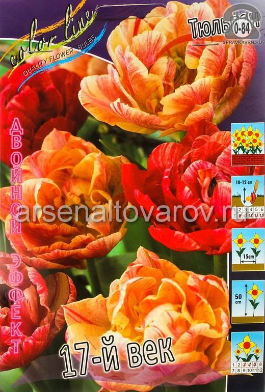 Клубнелуковичный цветок тюльпан Двойной Эффект 17 Век