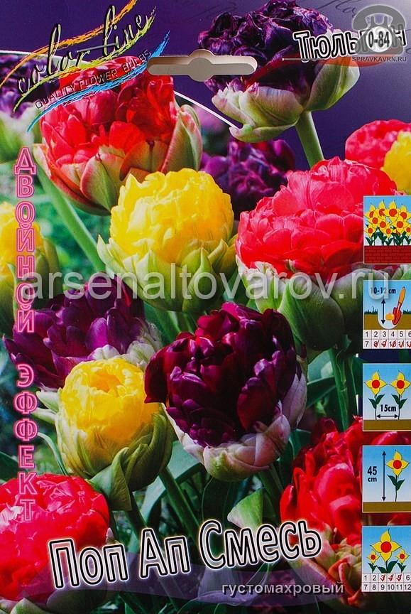 Клубнелуковичный цветок тюльпан Двойной Эффект Поп Ап Смесь