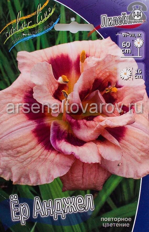 Посадочный материал цветов лилейник Ёр Анджел многолетник махровая корневище 1 шт. Нидерланды (Голландия)
